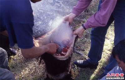 在动物内脏煮食