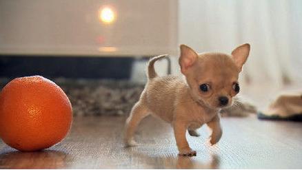 世界上最小动物
